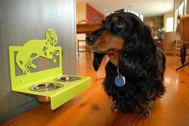 ciotola per il cane
