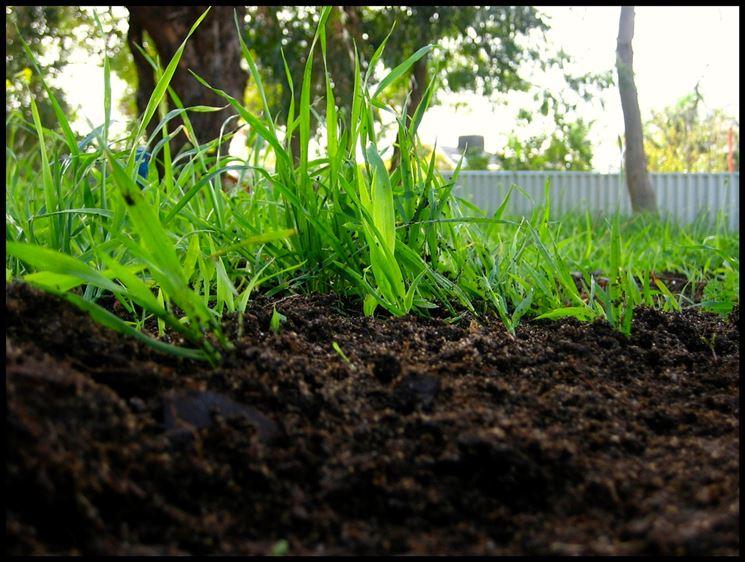 terreno concimato con il compost