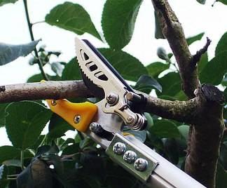 Forbici per potatura attrezzi da giardino - Attrezzi da giardino professionali ...