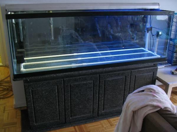 Acquario allestimento oggetti di casa - Acquario per casa ...