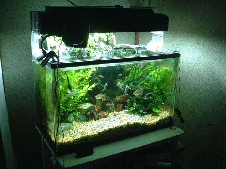 Allestire un acquario oggetti di casa for Acquario in casa