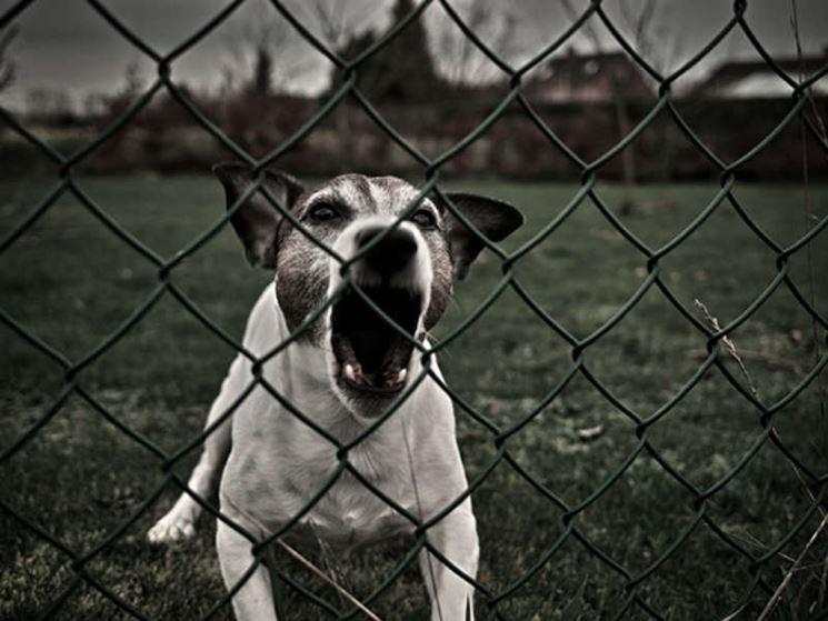 danni animali domestici