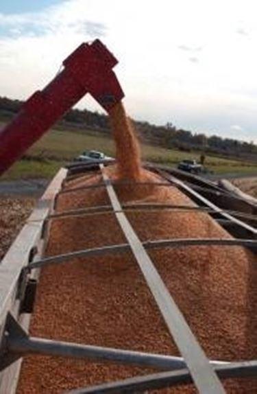 Vantaggi centrali biomasse