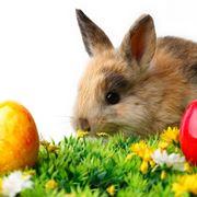 coniglio e uova pasquali