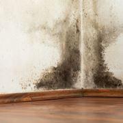 muffa e umidità pareti