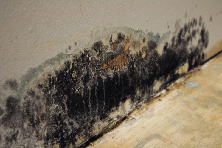 Umidit e muffa in casa come sconfiggerle consigli pratici come eliminare umidit e muffa in - Umidita e muffa in casa ...