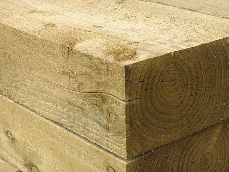 esempio di legno tenero