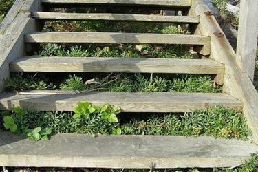 manutenzione dei gradini in legno