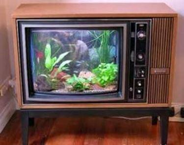 tv acquario