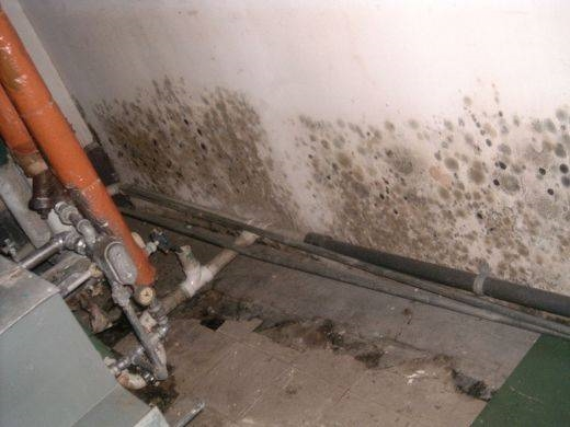 Come eliminare la muffa tecniche - Bagno purificatore ...