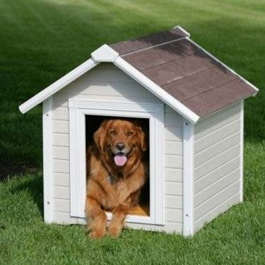 cuccia cane