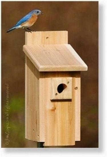 casetta in legno per uccelli