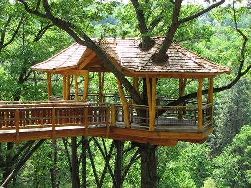 La casa sull albero casette - Casa sull albero da costruire ...