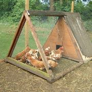 costruire pollaio