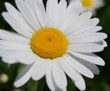 Fiori di stagione fiori in giardino riconoscere i for Giardino fiori