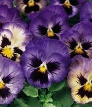 Fiori di stagione fiori in giardino riconoscere i - Fiori di giardino ...