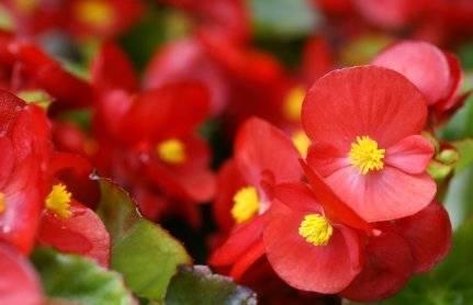 Piante da giardino con fiori fiori in giardino - Piante da giardino profumate ...