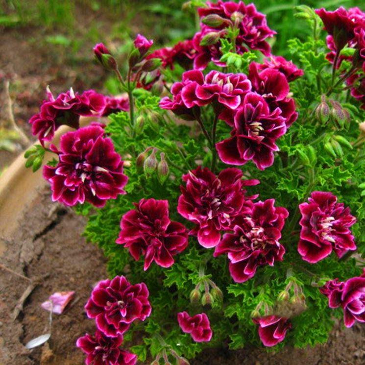 Semi di fiore sbocciati