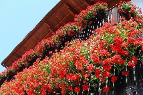 Balcone fiorito - Giardinaggio