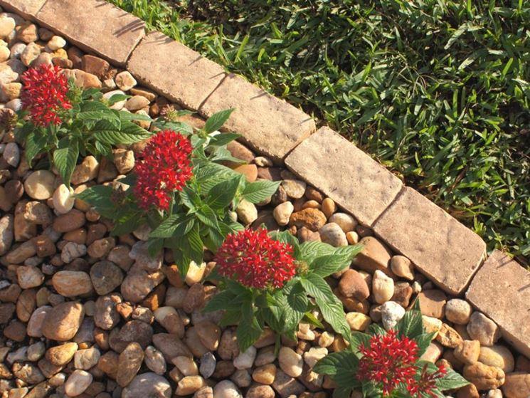 Bordi per aiuole giardinaggio come realizzare bordi per aiuole
