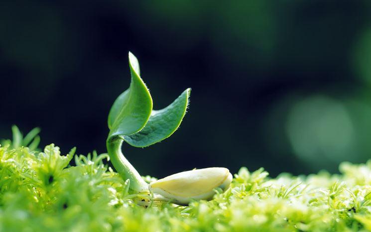 coltivare le piante
