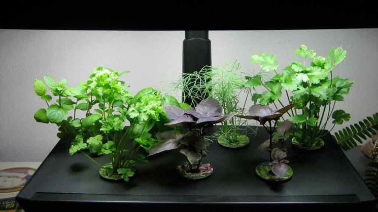 esempio di piccola coltivazione aeroponica