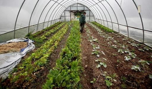 Costruire una serra giardinaggio - Serre da giardino fai da te ...