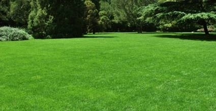 Curare il prato giardinaggio - Quando seminare erba giardino ...