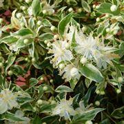 piante da giardino perenni