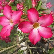 piante fiorite da giardino