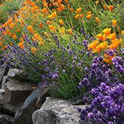 Fiori da giardino perenni giardinaggio - Fiori perenni da giardino ...