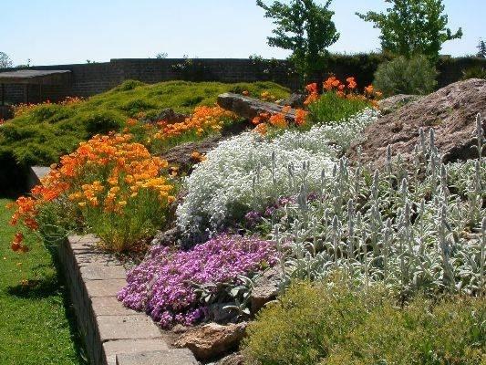Giardini rocciosi fai da te giardinaggio - Piante perenni per giardino roccioso ...