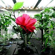 esempio di coltivazione aeroponica