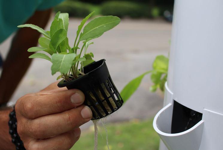 coltivare con il metodo aeroponico