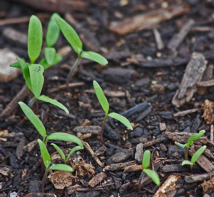 Lavori in giardino di aprile giardinaggio - Lavori in giardino ...
