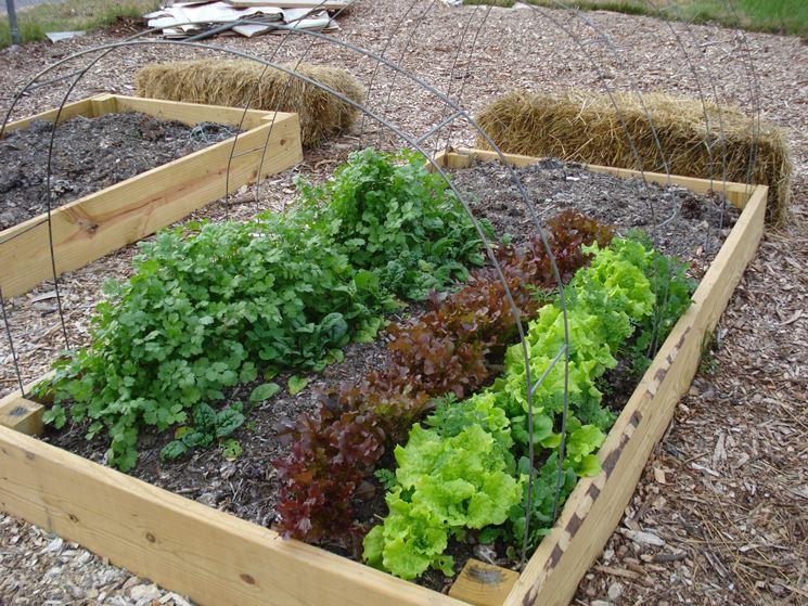 Allontanare le talpe dall'orto - Come fare l'orto ...