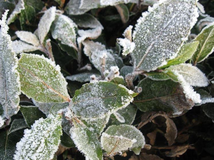 Gelate invernali