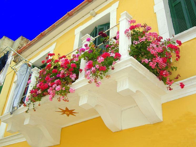 gerani su balcone