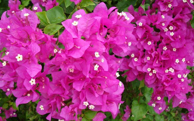 Scegliere i fiori in casa, terrazzo e giardino - Giardinaggio ...