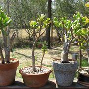 rinvasare piante