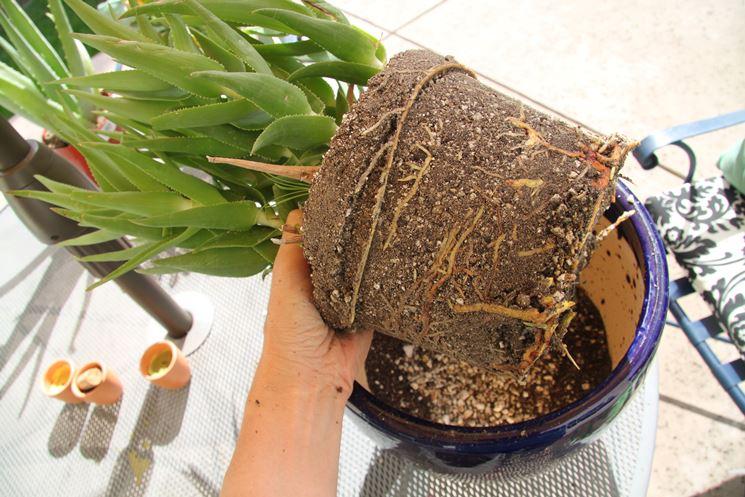 trapianto piante fai da te
