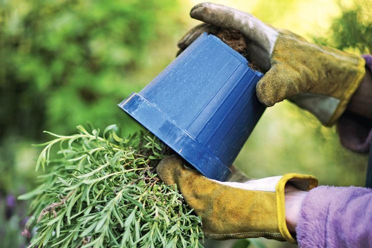 rinvaso piante fai da te