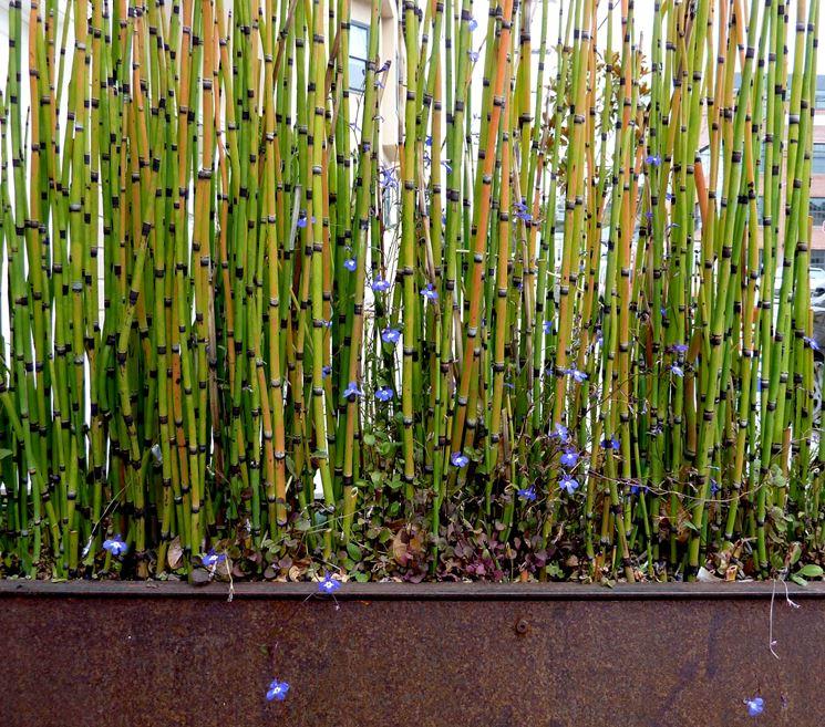 canne bamboo materiali per il giardino canne di bamboo