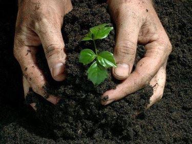 cncimi organici