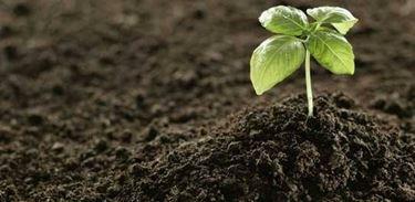 terreno e piante