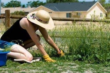 prendersi cura del giardino