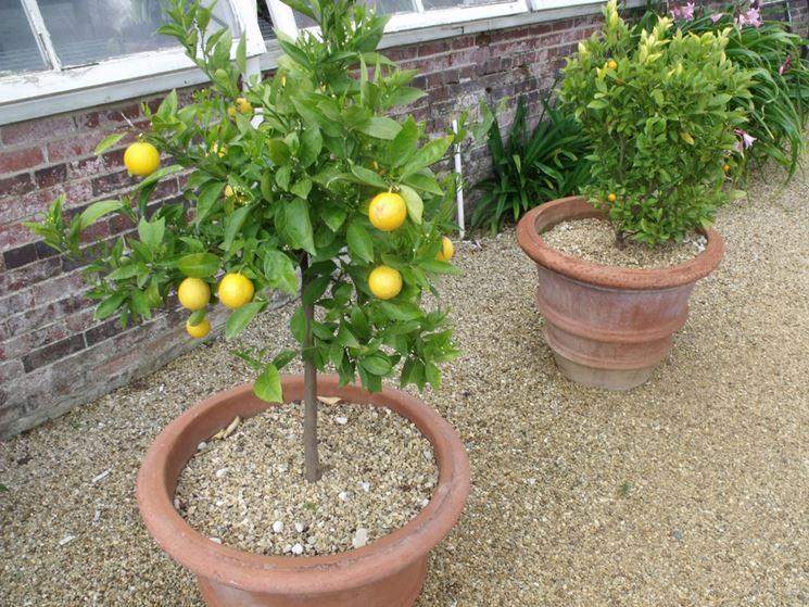 Terreno per la coltivazione degli agrumi