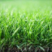 Terreno prato erba