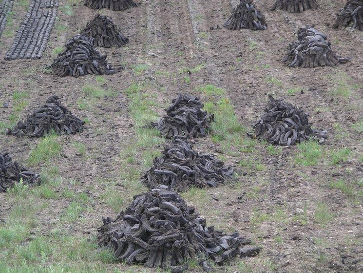 Torba materiali per il giardino caratteristiche della for Vaschette tartarughe