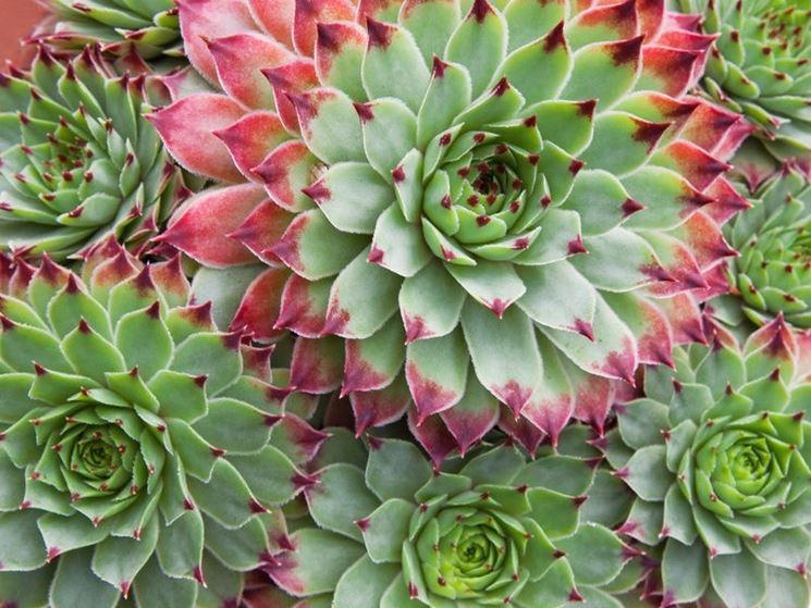 coltivare piante grasse